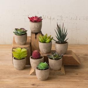 Succulents are a great way to add to a design style while also bringing color and texture into your home.